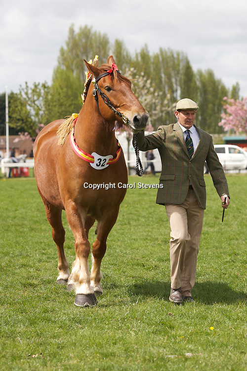 Kentwell Paigale   f 20/04/2004   S Fountain Arthur   D  Kentwell Celandine<br />