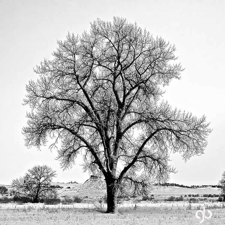 I took this picture on the Ides of April and after a spring snow storm.  This tree is located off of 12 Mile road in Shepherd, Montana.