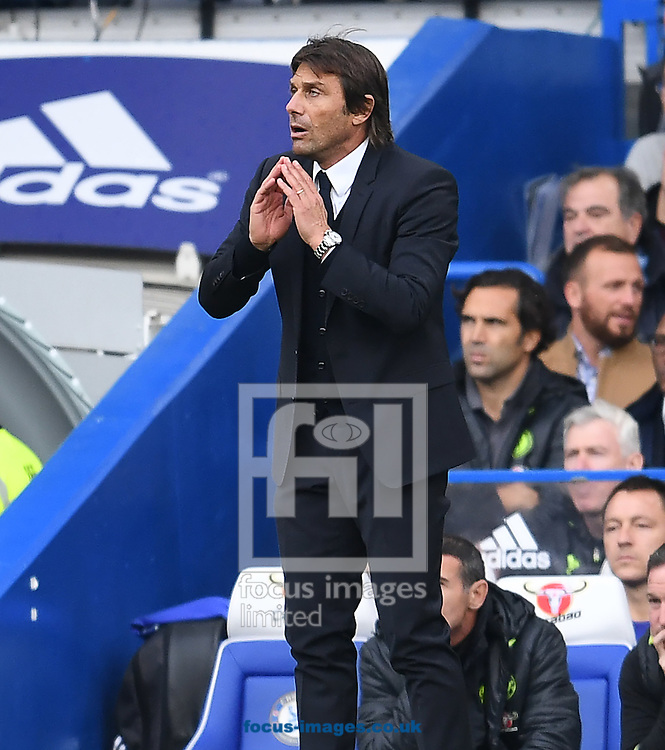 Manager of Chelsea Antonio Conte during the Premier League match at Stamford Bridge, London<br /> Picture by Andrew Timms/Focus Images Ltd +44 7917 236526<br /> 23/10/2016