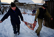 Yuri Sakharovich (left), a farmer living in the Bedime village in Yakutia, slaughters a cow with his son. Sakharovich recently joined the United Russia Party. .Nikifor Alfonski, head of the village, is pushing fellow villagers to join the party, which backs Russian President Vladimir Putin. On one single day this year, 136 people in his village joined the party. .United Russia is a political party in the Russian Federation which usually labels itself centrist. It can be seen as Putin's vehicle in the State Duma (the lower house of Russian parliament). It was founded in April 2001 as a merger between Yuriy Luzhkov's, Yevgeny Primakov's and Mintimer Shaeymiev's Fatherland - All Russia party, and the Unity Party of Russia, led by Sergei Shoigu and Alexander Karelin..United Russia is a relatively new party in the Russian Parliament but has been making great gains in recent federal and local elections due to the popularity of Putin.