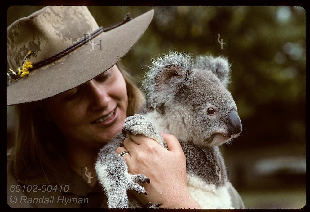 Year-old koala gazes about while huggd by vet nurse Lynne Douglas at Univ of Queensland; Brisbane. Australia