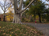 Autumn colors along the bridle path around The Reservoir in Central Park