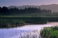 Elk Creek Wetlands, near Crescent City, Del Norte County, California