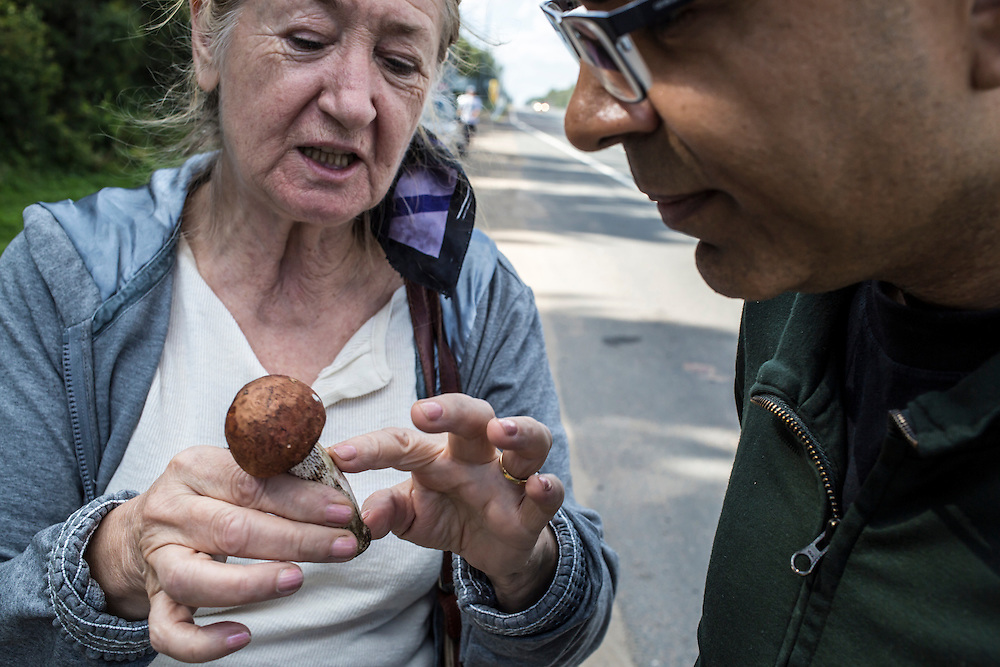 A guide shows an aspen mushroom found for sale along the roadside on Sunday, August 18, 2013 near Potapovo, Russia.