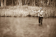 A Fly fisherman casts to spawning chinook salmon (King salmon) on the Pere Marquette River in Michigan.