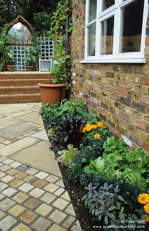 Narrow bed of salad and herbs grown along side of house. Paving with mirrored arch and wiggly trellis in the distance.