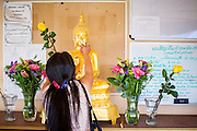 "11 MARCH 2012 - CHANDLER, AZ:      A woman rubs gold leaf on a Buddha statue before Makha Bucha services at Wat Pa in Chandler, AZ, Sunday. Magha Puja (also spelled Makha Bucha) Day marks the day 2,500 years ago that 1,250 Sangha came spontaneously to see the Buddha who preached to them on the full moon. All of them were ""Arhantas"" or Enlightened Ones who had been personally ordained by the Buddha. The Buddha gave them the principles of Buddhism, called ""The Ovadhapatimokha."" Those principles are: to cease from all evil, to do what is good, and to cleanse one's mind. It is one of the most important holy days in the Theravada Buddhist tradition. At the temple, people participate in the ""Tum Boon"" (making merit by listening to the monk's preaching and giving a donation to the temple), the ""Rub Sil"" (keeping of the Five Precepts including the abstinence from alcohol and other immoral acts) and the ""Tuk Bard"" (offering food to the monks in their alms bowls). It is a day for veneration of the Buddha and his teachings. It's a legal holiday in Thailand, Laos, Cambodia and Myanmar (Burma).   PHOTO BY JACK KURTZ"