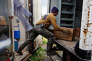 An intern works to load a truck at Joel Salatin's organic Polyface Farms in Swoope, Virginia on Monday, October 3, 2011.