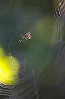 Spider on web, Bardia National Park, Nepal