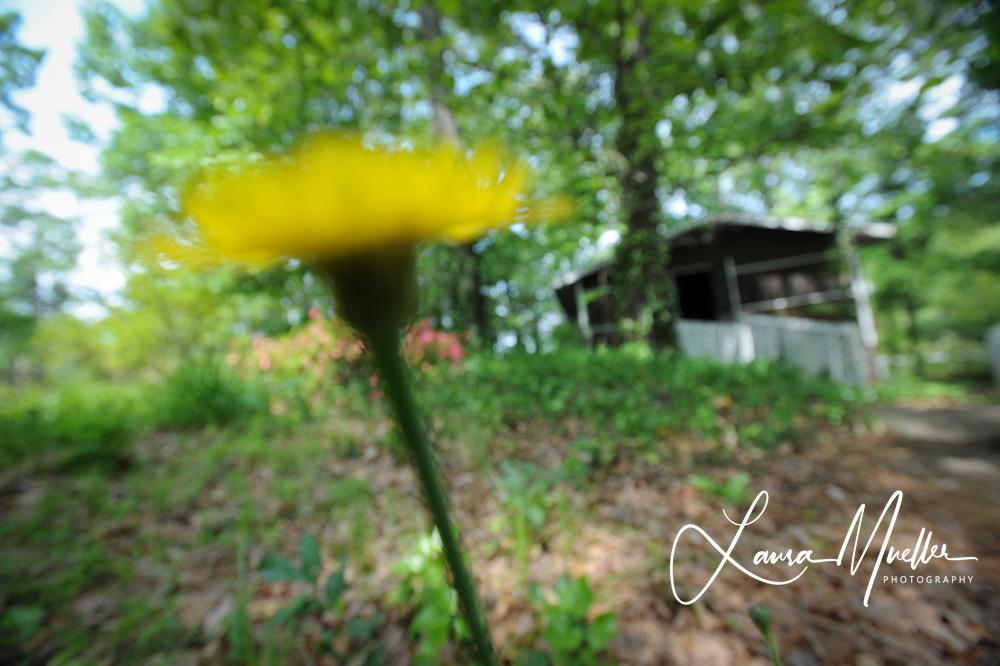 20110508 Cabin - Lake Norman.  © Laura Mueller - www.lauramuellerphotography.com