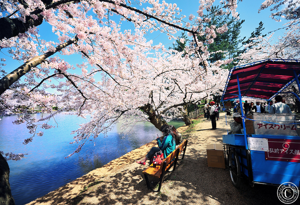 The northern moat of Hirosaki Castle Park in spring time.  Tourists can buy an ice cream fome the cart at the right and sit alongside the moat which is adorned with beautiful cherry blossoms. A very relaxing place to be.<br />