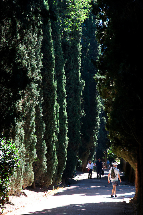 Avenue of cypresses in the garden of the Generalife, Grenada.  A few tourists stroll along the path.  Sharp sunlight and shadows.