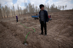 Local farmer Xiao Tian Hui (R) and his wife Chen Guo Fen water tree saplings that has been planted with the help of volunteers from Shanghai Roots & Shoots in Kunlun Qi in the Inner Mongolia Autonomous Region of China on 24 April 2011. Local farmers like Xiao take care of the trees planted by the volunteers and themselves on plots of land allocated by the local government where they are licensed to harvest the trees that have reached maturity, but only on the condition that they replant on the same plot. Inner Mongolia, China's third largest province, is fighting severe desertification, much like the provinces of Xinjiang, Gansu, Qinghai, Ningxia, Shaanxi, Heilongjiang and Hebei. Over-grazing, logging, expanding farms and population pressure, along with droughts have steadily turned once fertile grasslands into sandy plains. China has adopted measures to stop the land degradation such as reforestation, resettling nomadic Mongolians from grasslands to urban areas and restricting grazing areas. Tree planting has become a key government effort to combat desertification and supporting the government's reforestation endeavors are numerous non-governmental organizations (NGOs), such as Shanghai Roots & Shoots. The NGO launched the Million Tree Project in 2007 in Kulun Qi with aims to plant its first million trees by 2014 to hinder the expanding desert. To-date, they have planted more than 600,000 trees.
