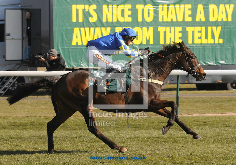 Picture by Michael Sedgwick/Focus Images Ltd +44 7900 363072.06/04/2013.Auroras Encore ridden by Ryan Mania gallops for the winning post during The John Smith's John Smith's Grand National Steeple Chase on the John Smith's Grand National Day, at Aintree Racecourse, Aintree.