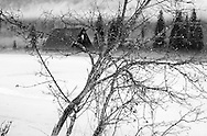 Frozen pond and barn in spring during rainstorm. Yaak Valley, northwest Montana.