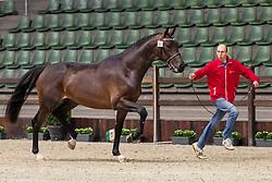 064, Rolex W Van Prinsenhof's<br /> BWP Hengsten Keuring - Lier 2020<br /> © Hippo Foto - Dirk Caremans<br /> 16/01/2020