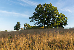 Oak trees on Sagamore Hill in Hamilton, Massachusetts.
