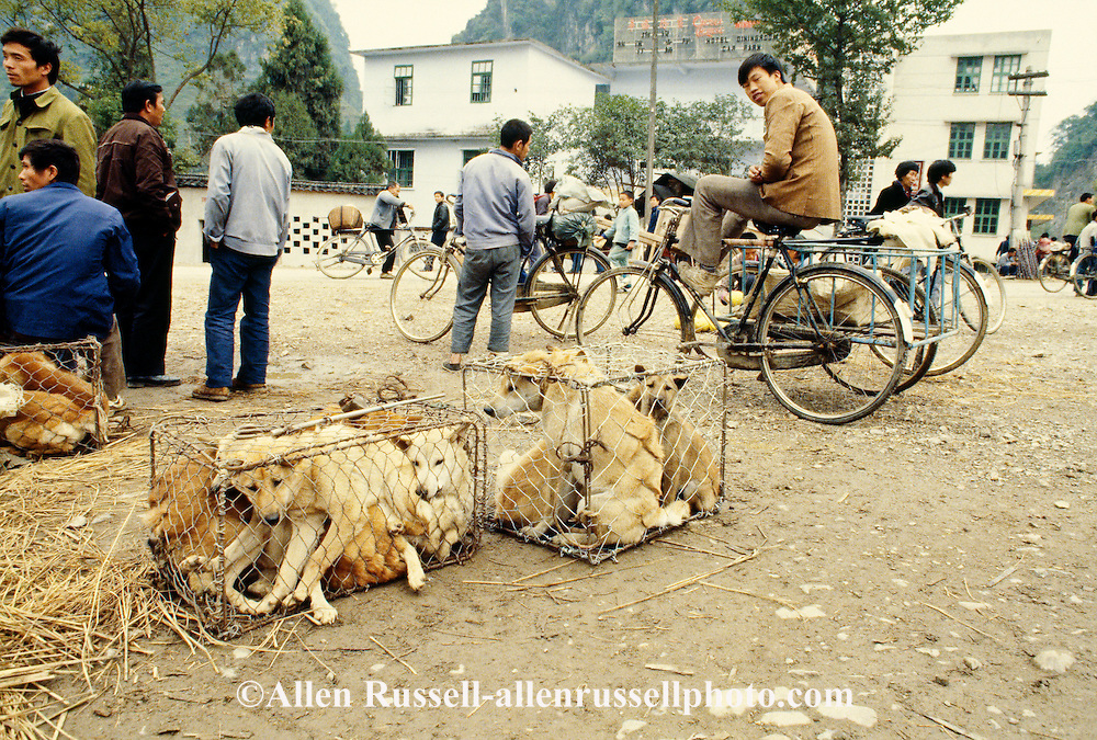 China, Guangxi Province, Yangshou, Dogs sold for food