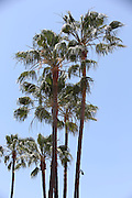 ANAHEIM, CA - JUNE 5:  Palm trees wave in the breeze before the Los Angeles Angels of Anaheim game against the Chicago Cubs on Wednesday, June 5, 2013 at Angel Stadium in Anaheim, California. The Cubs won the game 8-6 in ten innings. (Photo by Paul Spinelli/MLB Photos via Getty Images)