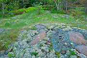 Lichens on rock on the shore of Blindfold Lake<br />Kenora DIstrict<br />Ontario<br />Canada