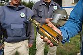 Balkan Landmines