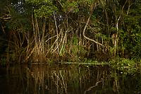 Anangu lagoon, Yasuni National Park, Orellana Province, Ecuador