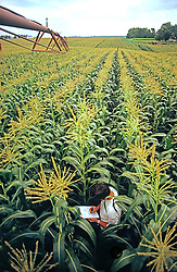Young Farmer collecting Data In  Corn Field Agriculture