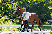 Jiri Nesvacil, (CZE), Arnie, Carmen 17, Putin, Weekend - Horse Inspection Driving - Alltech FEI World Equestrian Games™ 2014 - Normandy, France.<br /> © Hippo Foto Team - Leanjo de Koster<br /> 25/06/14