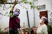 A man wearing a face mask and a bicycle helmet is explaining to a pensioner how to properly cut an apple tree in times of social distancing related to the spreading of the corona virus.