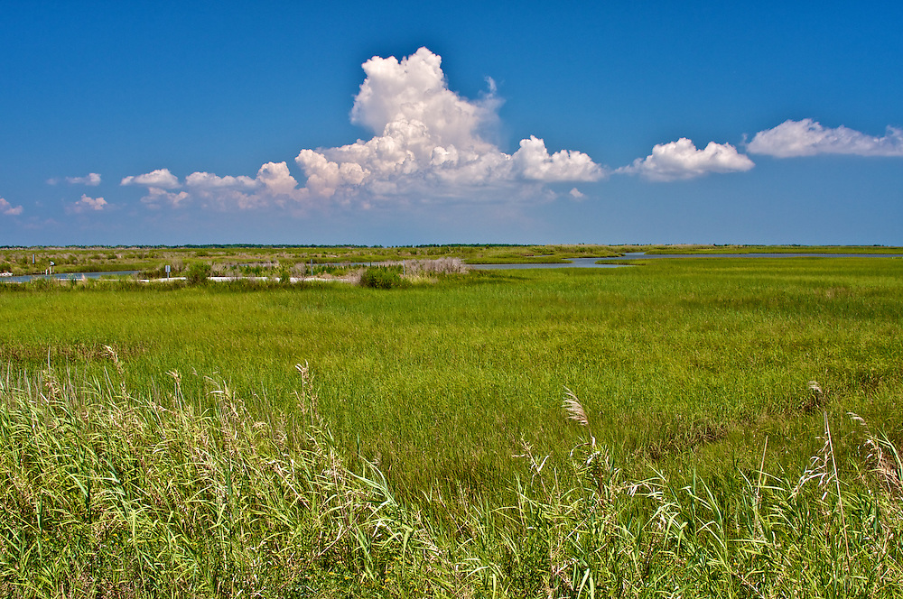 Endless Wetlands, Cameron Parish, LA