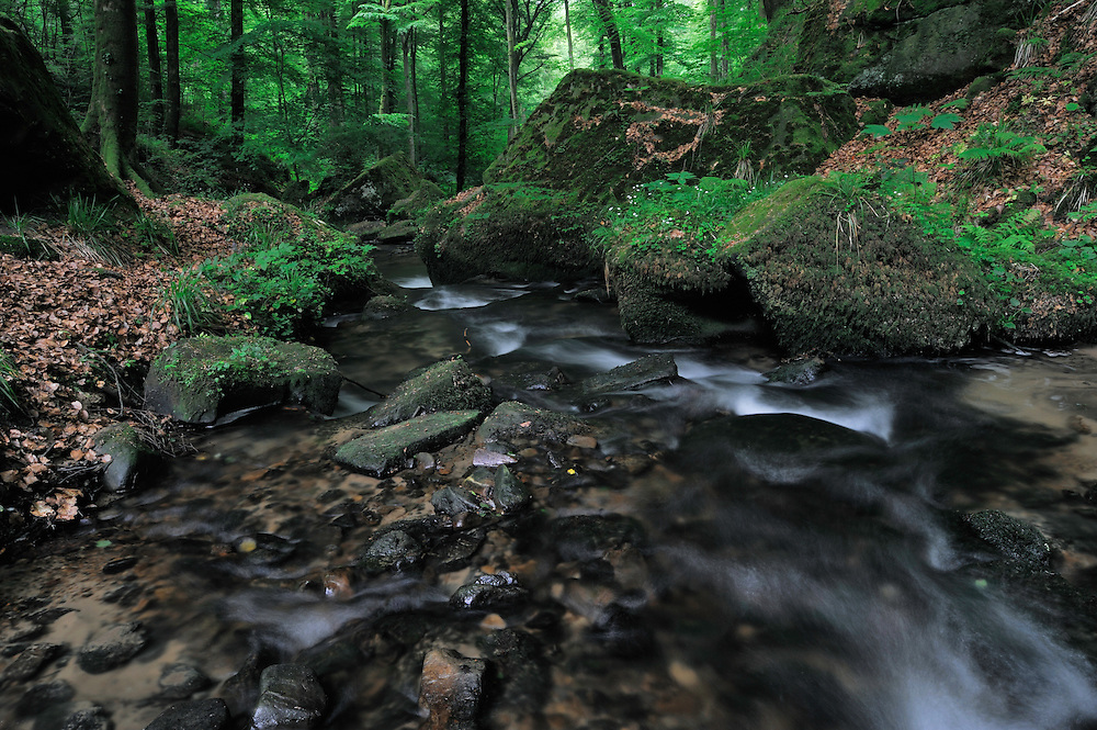Small Stream in a thick forest. Halerbach / Haupeschbach, Mullerthal trail, Mullerthal, Luxembourg
