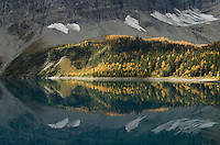 Subalpine larches in autumn, Floe Lake, Kootenay National Park British Columbia