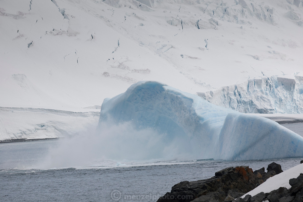 An iceberg calving and splitting in half in the S. Shetand Island off Half Moon Island, home to over 3000 pairs of chinstrap penguins, many with chicks at this time of year, late in the Antarctic summer. Off the Antarctic Peninsula.