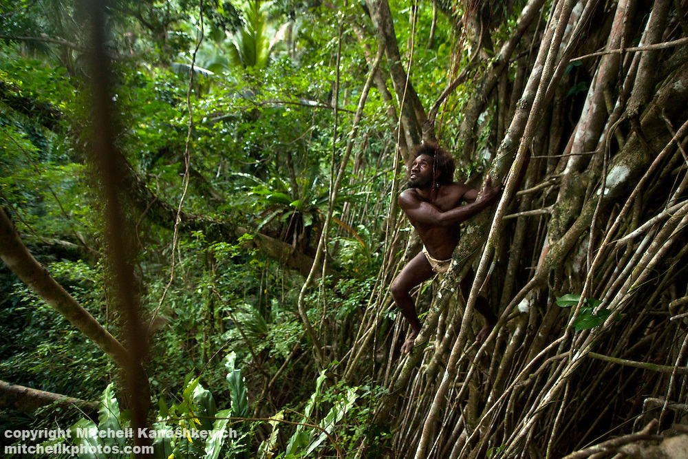Traditional Ni Vanuatu man climbing a tree in hunt for birds and flying foxes, Rah Lava Island, Torba Province, Vanuatu