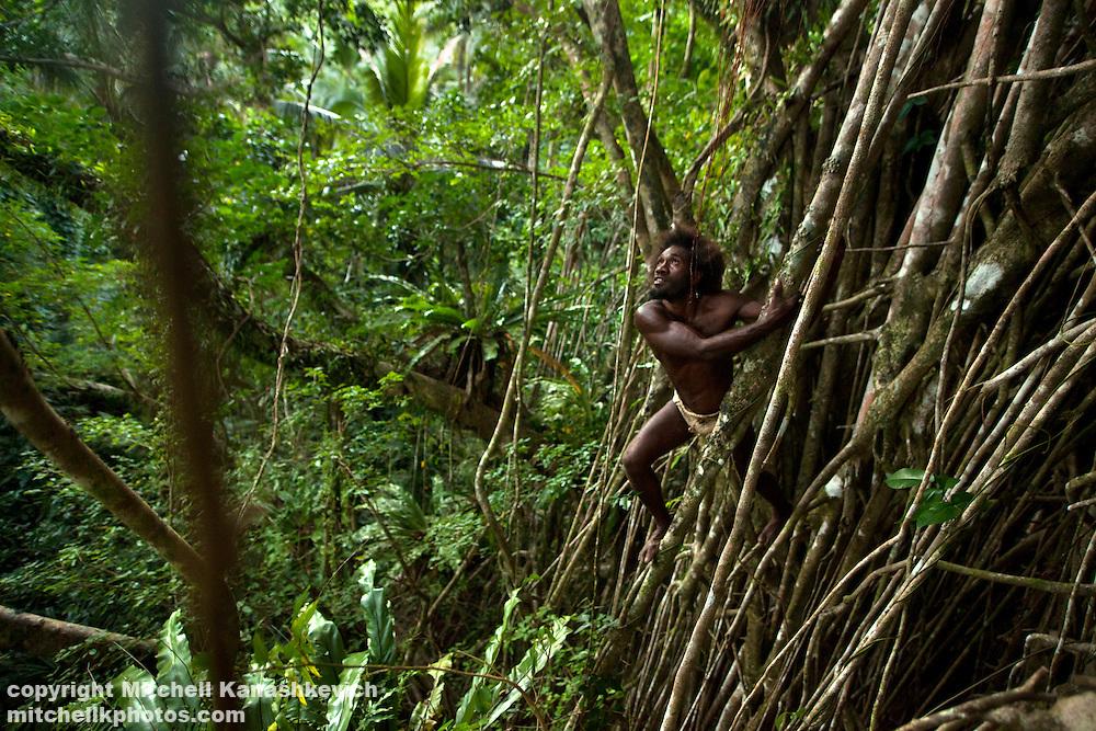 Traditional Ni Vanuatu man climbing a tree in hunt for birds and flying foxes, Rah Lava Island, Torba Province, Vanuatu