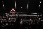 Samoa Joe slams Finn Balor during NXT Takeover: Dallas on April 1, 2016 in Dallas, Texas.