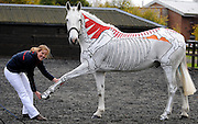 21/10/2009 Champion horserider Gillian Higgins teaches horse anatomy by painting the inside of a horse on the outside of a horse.