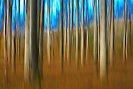 Trees Abstract