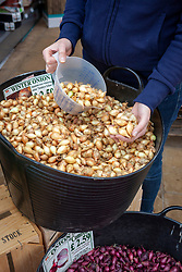 Buying onion bulbs in a garden centre