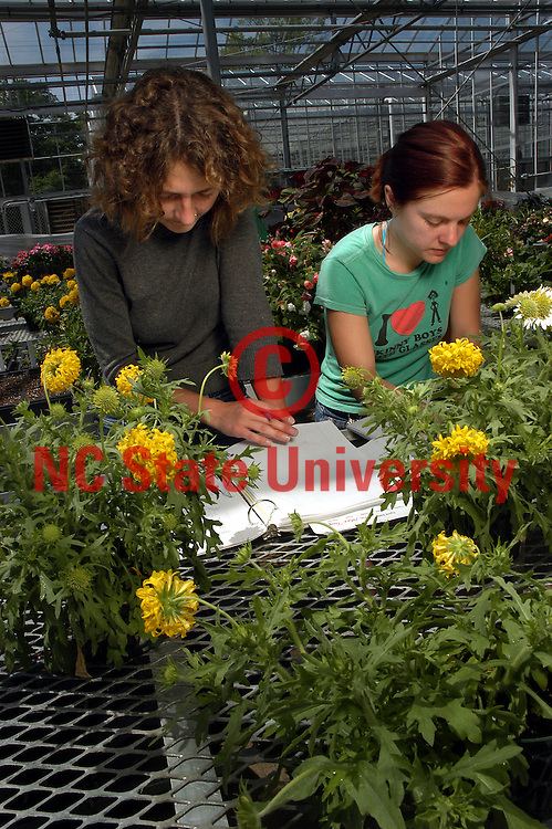 Horticulture seniors Lela Walker (left) and Stephanie Eldridge (right) compare notes while working in the greenhouse behind Fox Labs.    PHOTO BY ROGER WINSTEAD