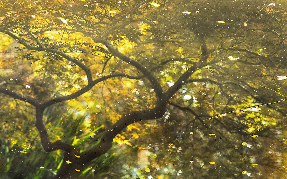Monet inspired image of the Japanese Garden at the Descanso Gardens made using reflection in the pool.