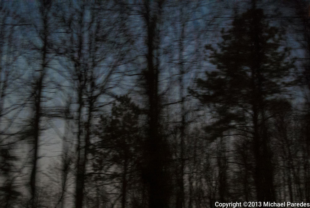 A stand of trees outside Wilmington, Delaware, seen from an Amtrak window
