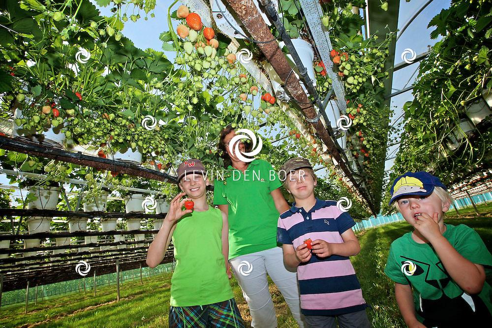 KERKWIJK - Aardbeienteler en Imkerij De Weert deed mee aan de Open Dag Beleef de Boerderij van Capreton, de vereniging voor agrarisch natuur- en landschapsbeheer. Met op de foto een gezin die uitleg krijgt over de ontwikkeling van de Aardbei. FOTO LEVIN DEN BOER - PERSFOTO.NU