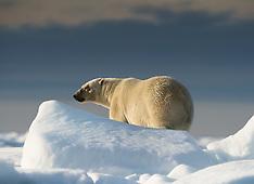 Svalbard #17 2013