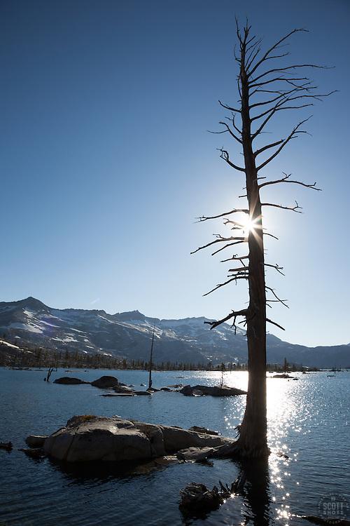 """Lake Aloha 11"" - Photograph of a dead tree at Lake Aloha in the Tahoe Desolation Wilderness."