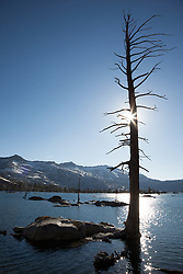 """Lake Aloha 11"" - Photograph of a dead tree at Lake Aloha in the Tahoe Desolation Wilderness."