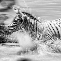 Monochrome converted images from African fauna and flora.