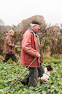 Beaters and dogs on Shoot walking across field of fodde beet