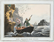 Bird Catching from Below'. Catchers were helped up the cliffs by colleagues in rowing boats. Birds and eggs were a great economic resource for the Shetland Islanders.  Aquatint after JH Clarke from 'Foreign Field Sports', Edward Orme, (London, 1813)