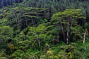 Tea Plantations, Nuwara Eliya, or Little England, Sri Lanka